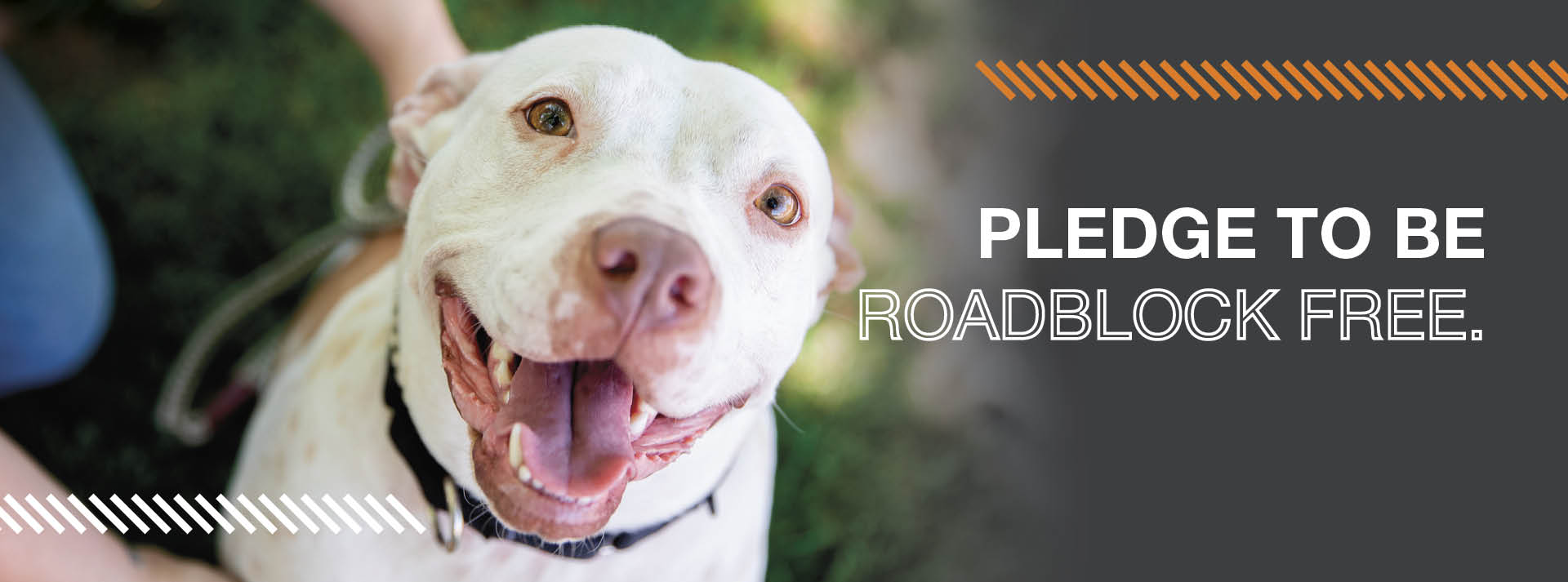 White pit bull dog looking at camera with mouth open with roadblock free text to the right