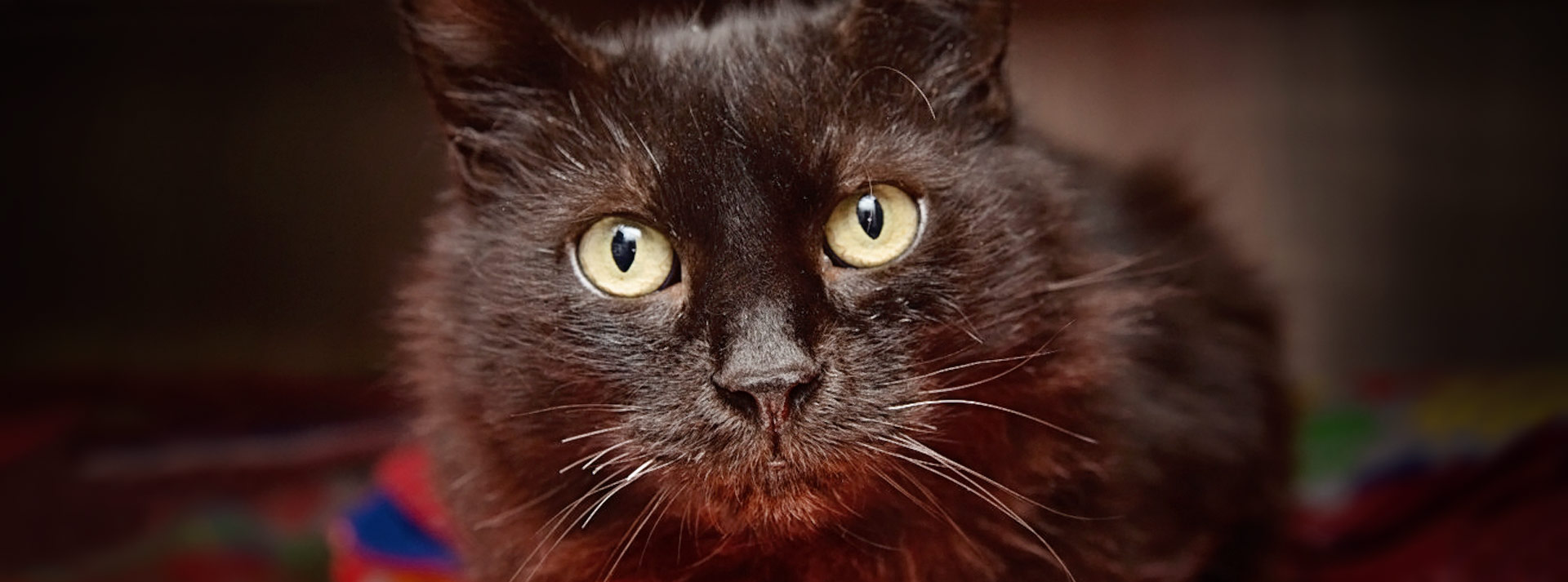 Black cat with green eyes looking at camera