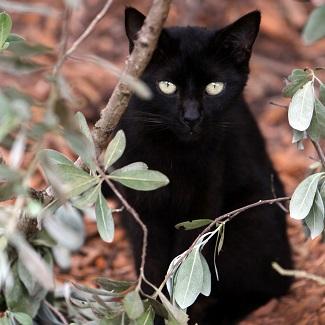 Black cat standing behind tree branch