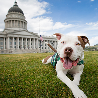 Captain Cowpants the dog in front of the Utah Capitol