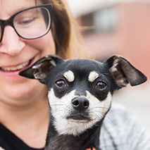 Small Chihuahua-type dog with a smiling woman holding him