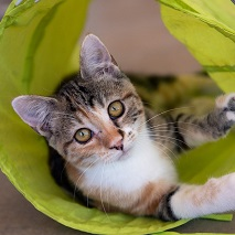 White, brown, and tabby kitten lying in a neon green cat tunnel