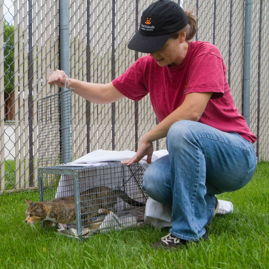 A woman lifts the door of a humane trap to release a community cat