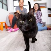 Black cat walking towards camera