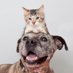 Smiling brown dog with kitten sitting on head