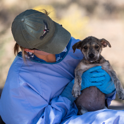 Man in blue protective gear holds small puppy