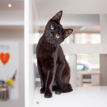 Black cat with head tilted to the right.