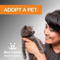 Adoption photo for Instagram cat