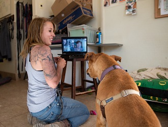 Person in gray shirt sitting in front of lap top with brown dog virtually meeting adopters