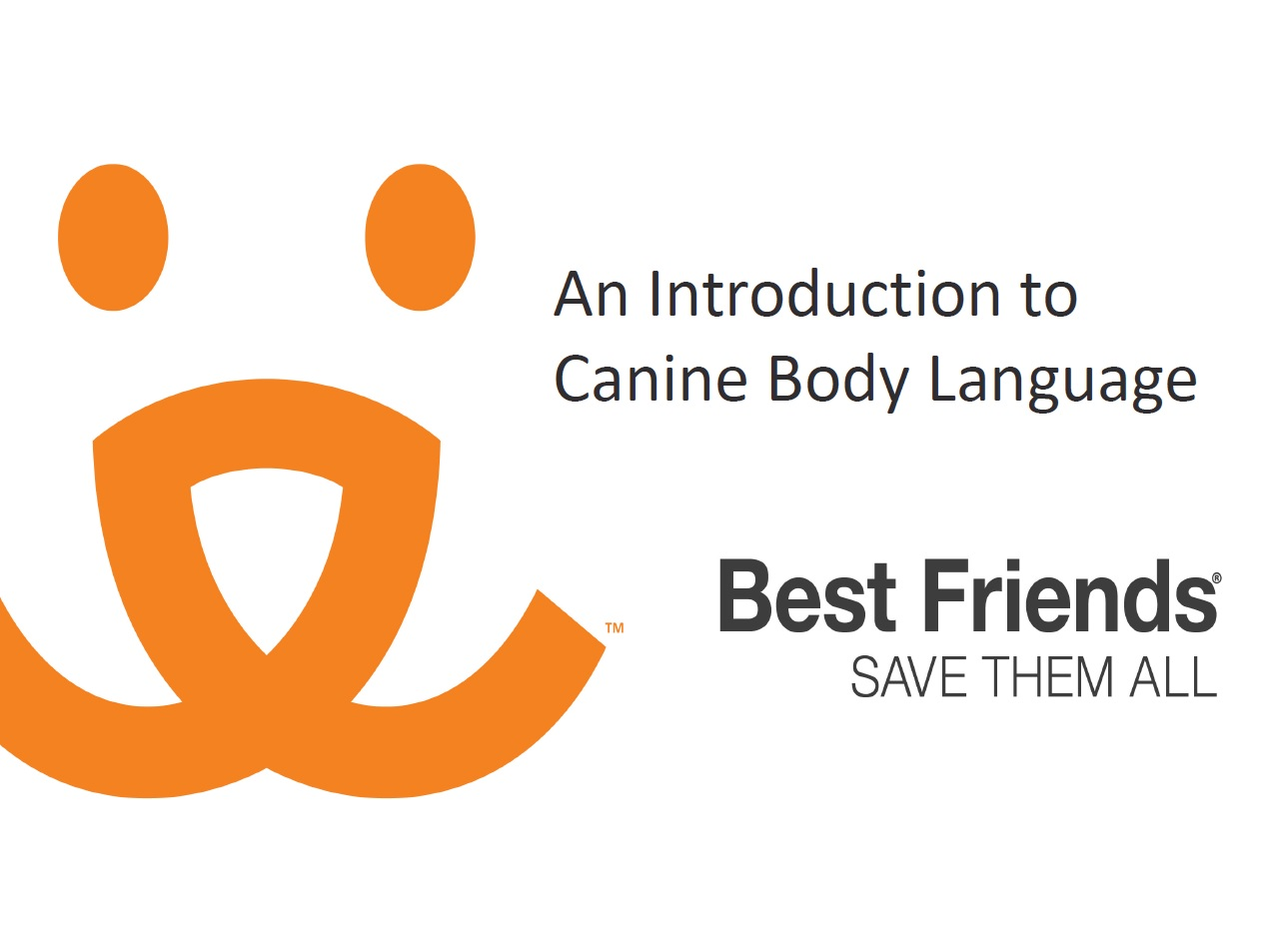 "A view of the ""An introduction to canine body language"" webinar"