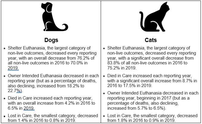 Cat Dog Chart