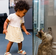 Little girl looking at  tabby cat in glass enclosure
