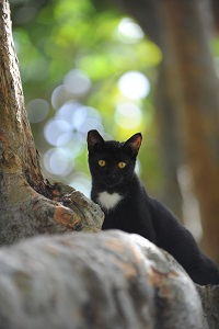 Black community cat standing and looking over rock next to a tree