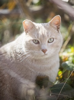 White cat standing in grass