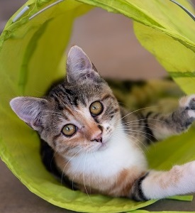 Tabby cat lying in bright yellow cat tunnel