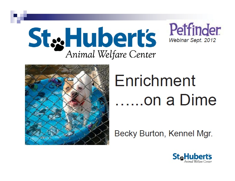 "A view of the ""Enrichment on a Dime for Dogs, Cats, and Small Animals"" webinar"