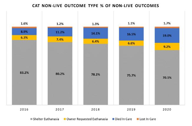 Cat non-live outcome type % of non-live outcomes