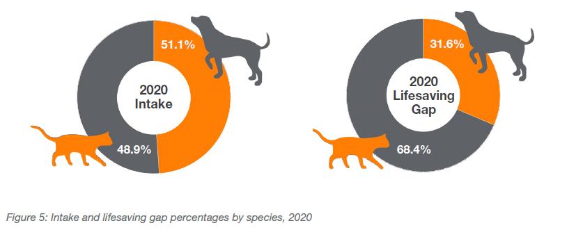 Intake and lifesaving gap percentages by species, 2020