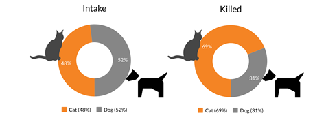 Intake percentage and percentage killed by species chart