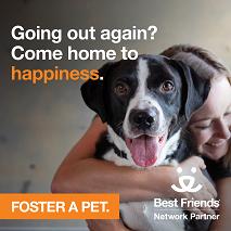 Foster Dog Instagram