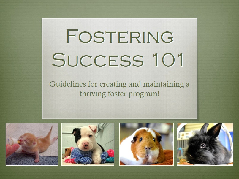 "A view of the ""Fostering 101"" webinar"