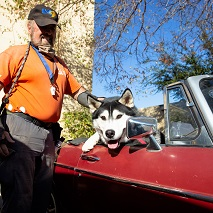 Black and white husky sitting in red convertible with man in orange shirt standing beside