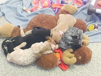 Puppies sleeping on large stuffed moose