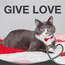 Give Love Valentine adoption promotion kit