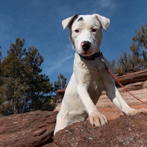 White and black puppy standing on rock with blue skies behind