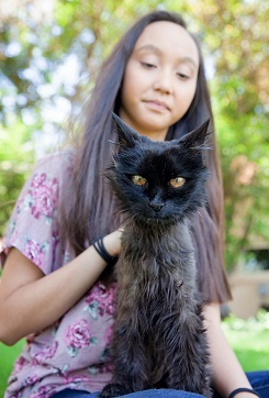 Woman with long dark hair with long haired black cat sitting on lap