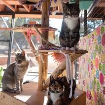 Three cats sitting on a cat tree