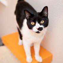 Black and white cat on orange shelf