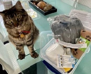 Brown tabby cat sitting next to kitten kit