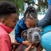Little girl kissing gray pit bull type dog with little boy in pink shirt sitting next to dog