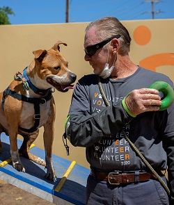 Man in a gray shirt holding green dog toy to the right of tan dog on ramp