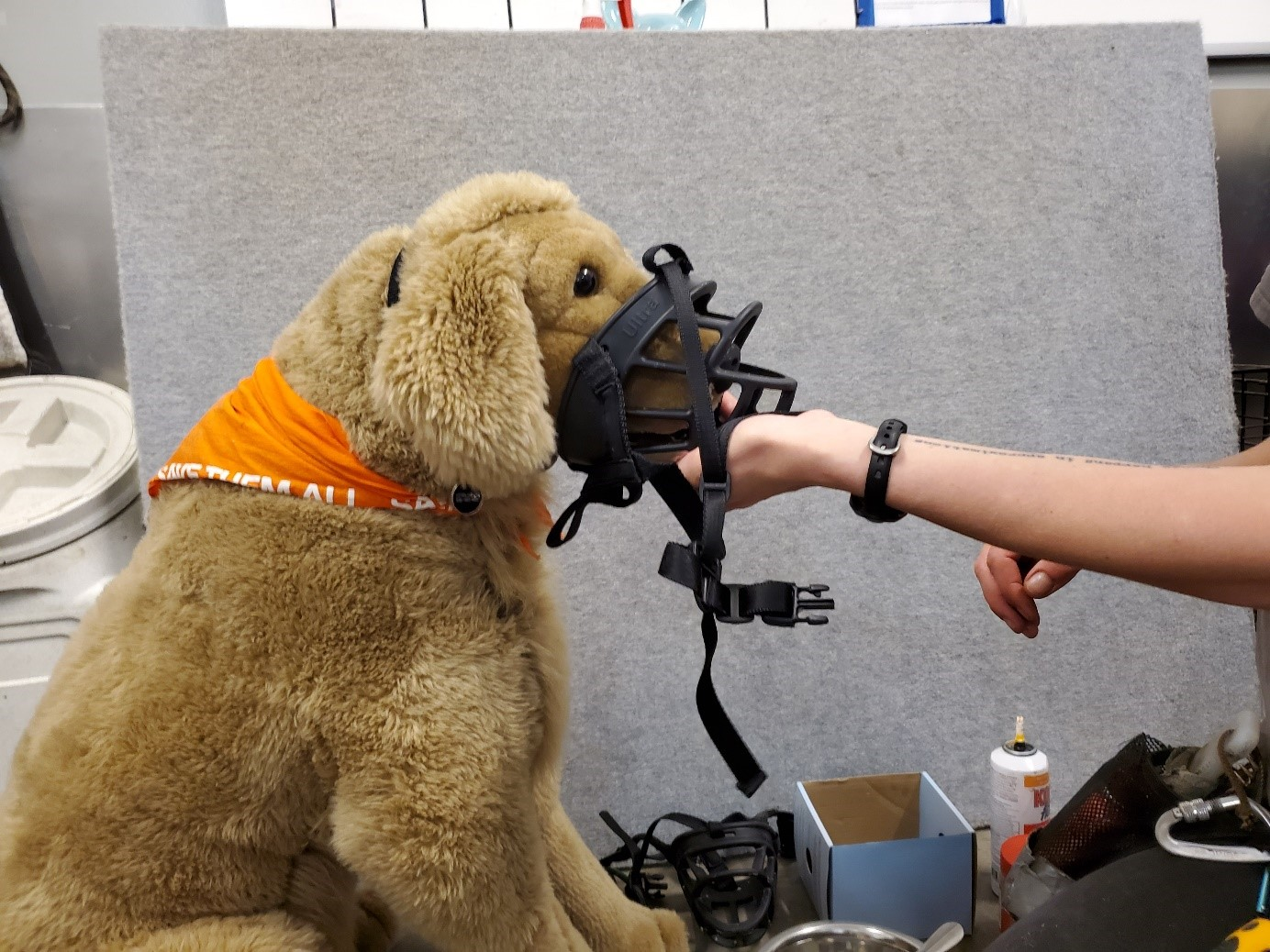 Muzzle with treat inside being placed on a plush dog for training