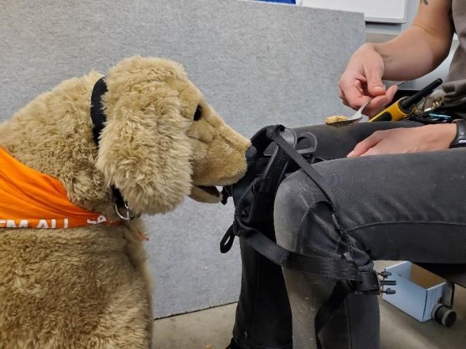 Muzzle training demonstrated on a plush dog