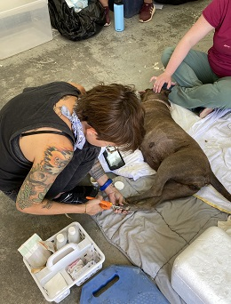 Volunteer clips brown dog's nail while dog is lying down