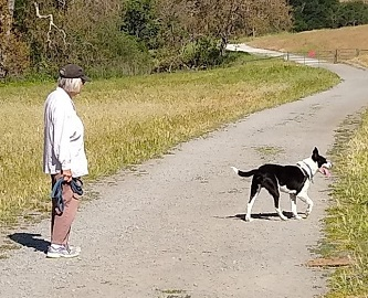 Black and white dog walking with owner