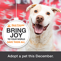 Network partner Bring Joy holiday adoption promotion