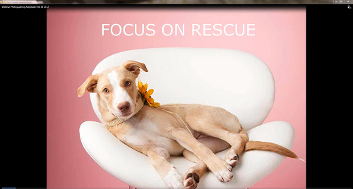 "A view of the ""Photographing Adoptable Pets"" webinar"