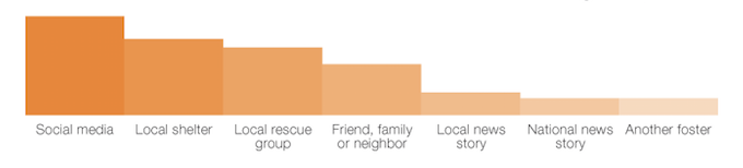 bar graph showing information regarding foster homes