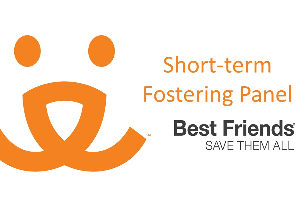 "View of ""short-term fostering"" webinar"