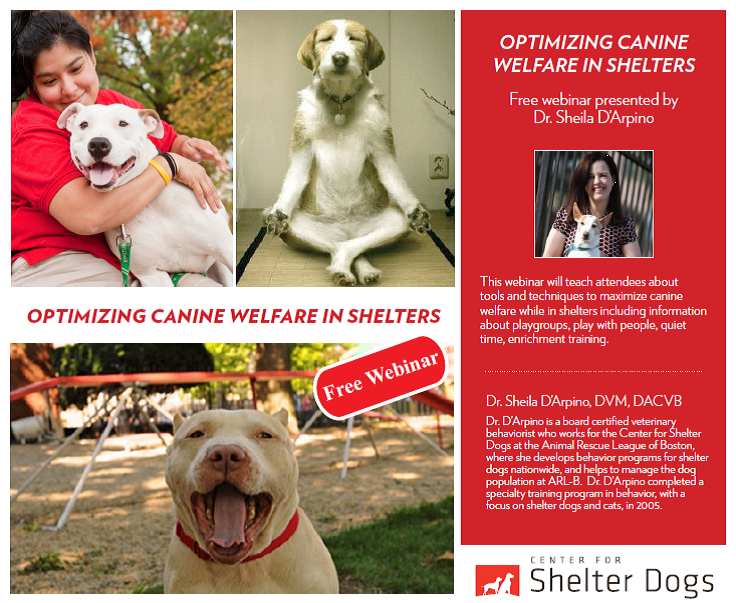 "A view of the ""Optimizing Canine Welfare in Shelters"" webinar"