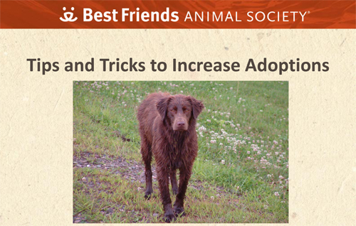 "A view of the ""Tips and Tricks to Increase Adoptions"" webinar"