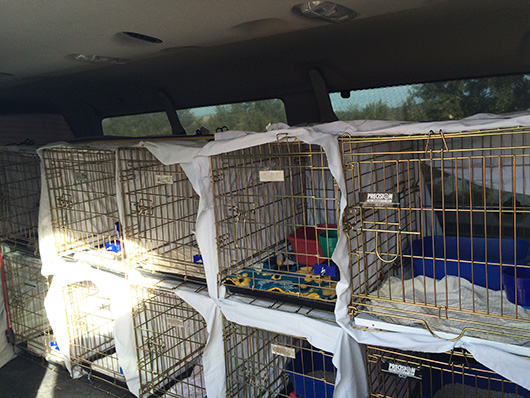 Build two walls of 12 crates each, making sure to cover each kennel for privacy, yet allowing for sufficient air flow. Secure with bungee cords.