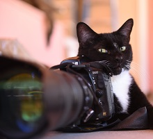 Black and white cat with camera
