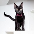 Black and white cat in white box