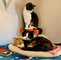 One cat standing above two cats lying in a cat bed