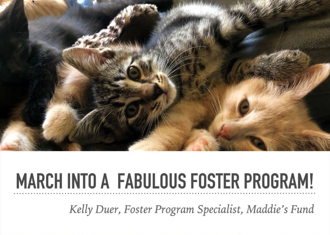 March into a fabulous foster program
